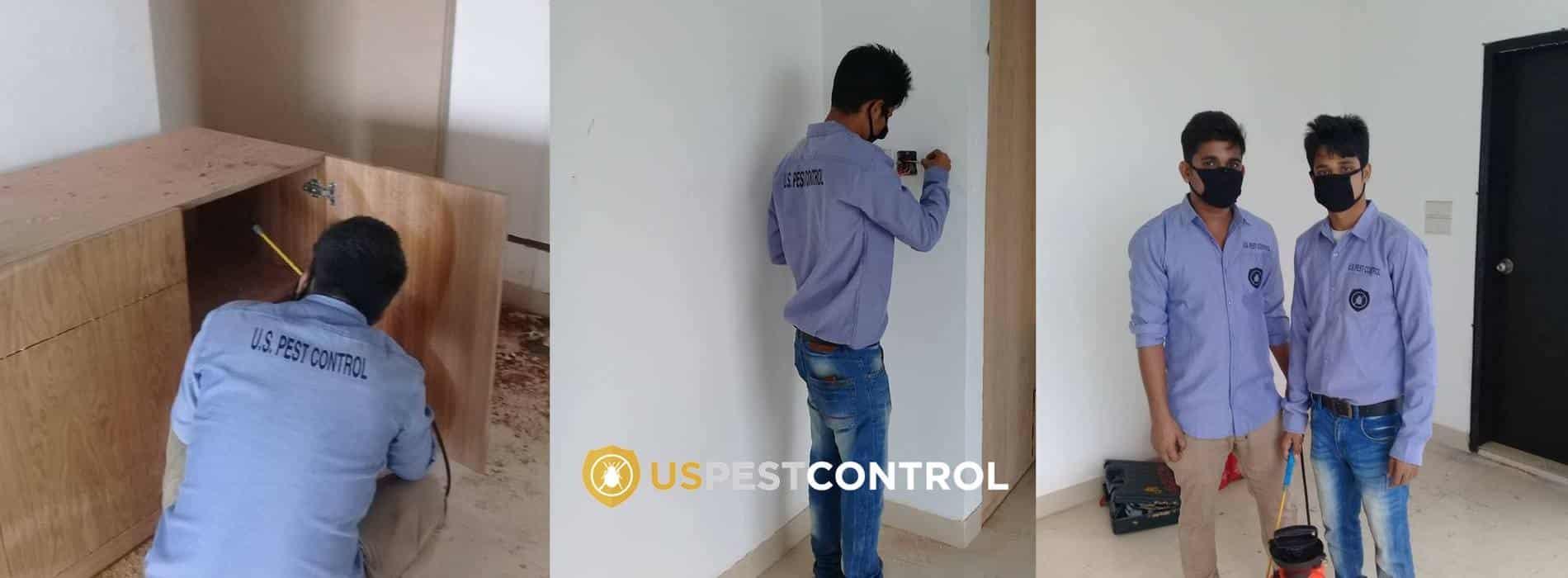 termite control in dhaka